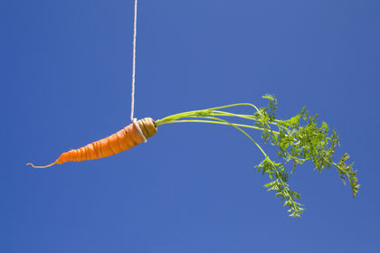 How to catch the carrot
